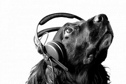 Audiophilia November 2011