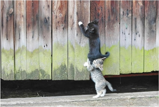 kitten-teamwork